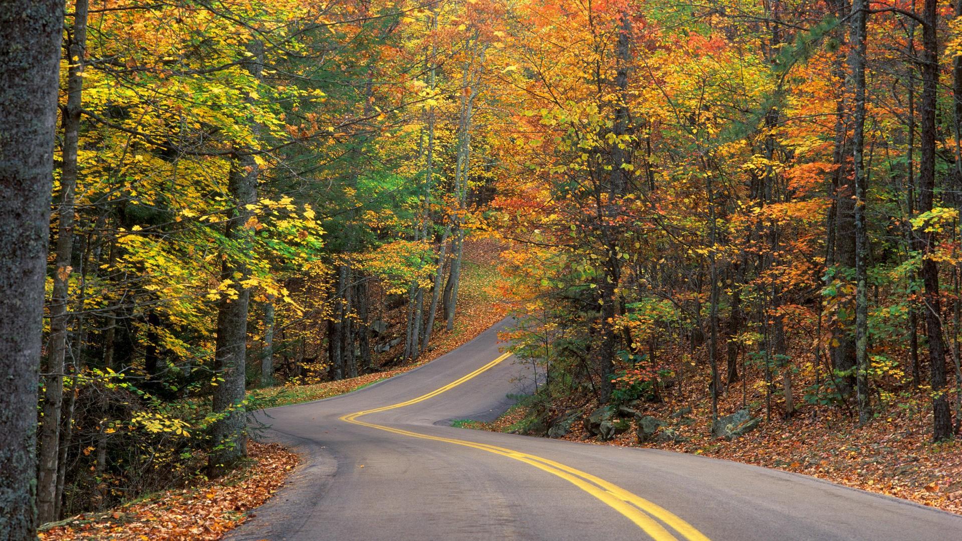 carretera-otoño